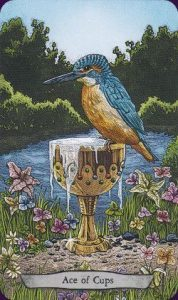 Ace of Cups - Animal Totem Tarot Deck